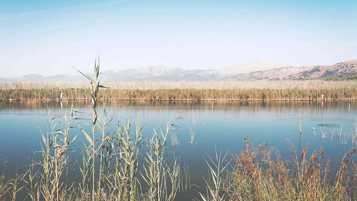 hom properties mallorca lifestyle encanto natural imagen rio y flora